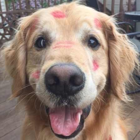 Unique Commands You Can Teach Your Dog