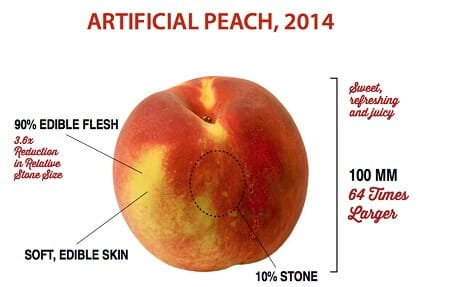 6 Fruits and Vegetables That Looked Way Different Before We Domesticated Them - The Modern-Day Peach