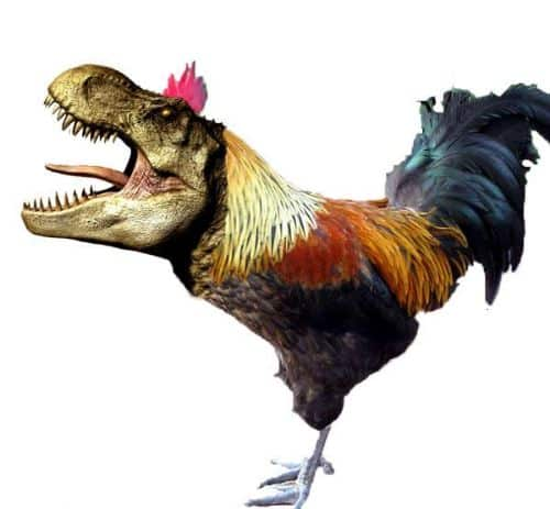 Bird Ancestors - Amazing Facts About Dinosaurs