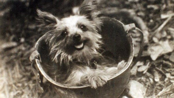 Smoky - Most Famous Dogs Of All Time