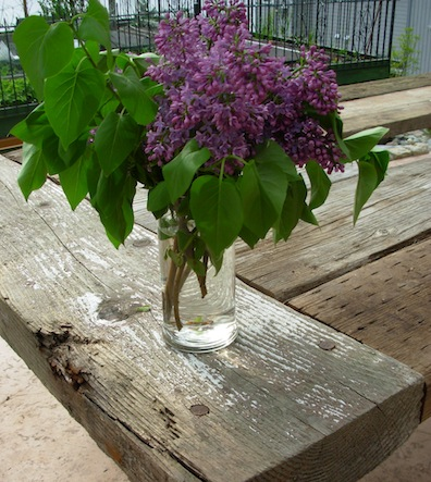 lilacs on old wood
