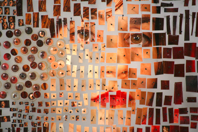 Photographic Specimens by Michael Mapes sculpture photography installation