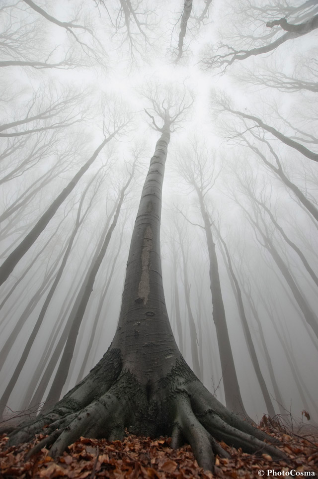 The Surreal Forests of Romania trees Romania photography