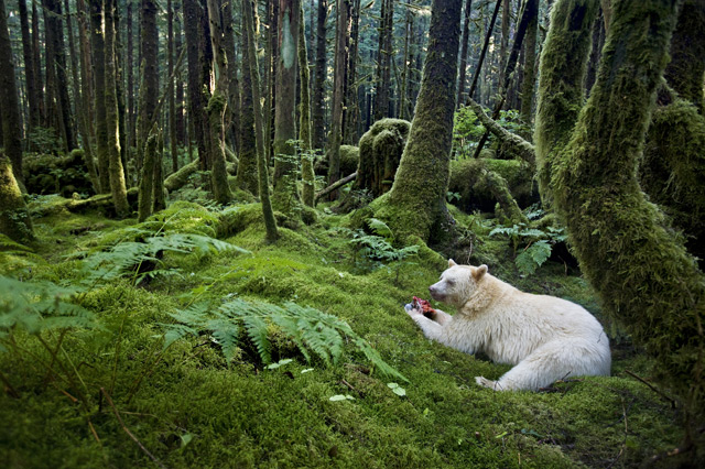 Winners of the 2012 Wildlife Photographer of the Year nature animals