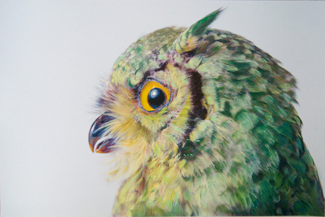 Colored Owl Drawings by John Pusateri drawing birds