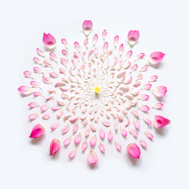 Exploded Flowers by Fong Qi Wei flowers