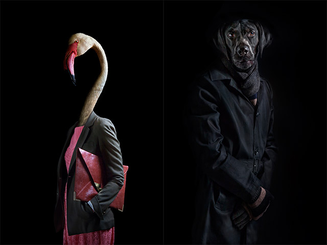 Second Skins: Fashionably Dressed Animals Photographed by Miguel Vallinas portraits fashion clothing birds anthropomorphic animals