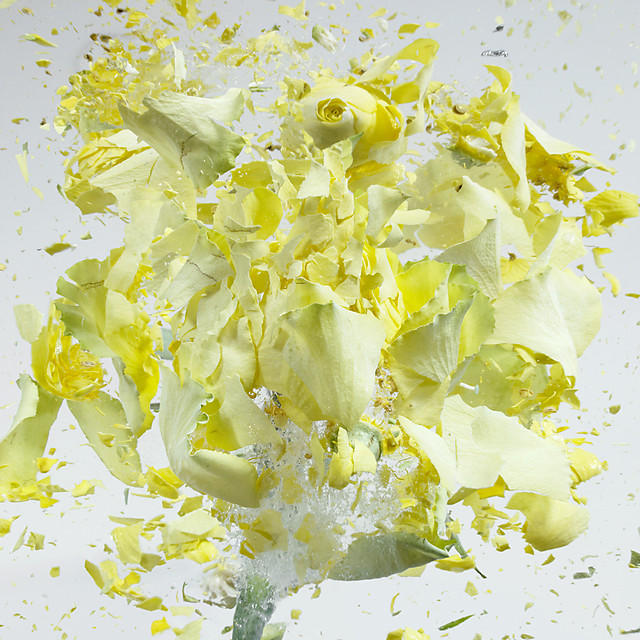 High Speed Flower Explosions by Martin Klimas high speed flowers