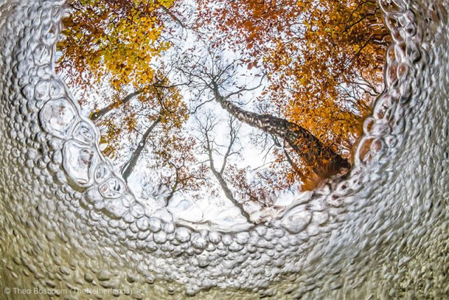 Wildlife Photographer of the Year 2013 Winners and Honorable Mentions nature