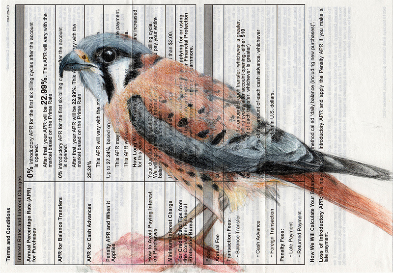 Birds on Bills by Paula Swisher illustration birds