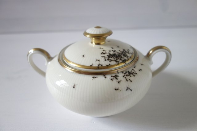 Vintage Porcelain Dishes Covered in Hordes of Hand Painted Ants porcelain insects ceramics