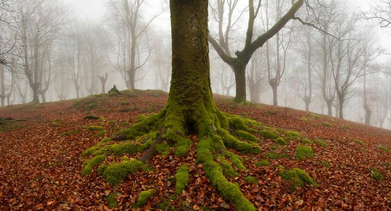 bosque carbonero