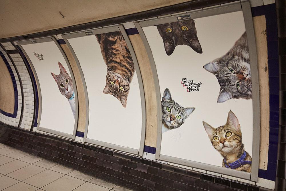 cats-7