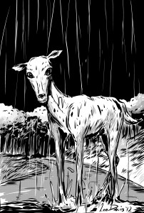 The Rain Deer