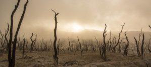 desert-horror-slider-960x430