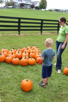 Deciding on the perfect pumpkin