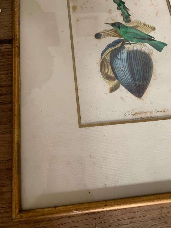 ancienne lithographie oiseaux vintage