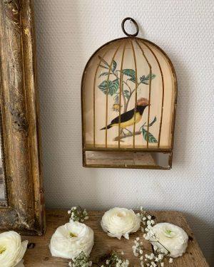 ancienne lithographie cage à oiseaux 19eme
