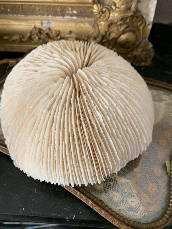 anciens coraux blancs