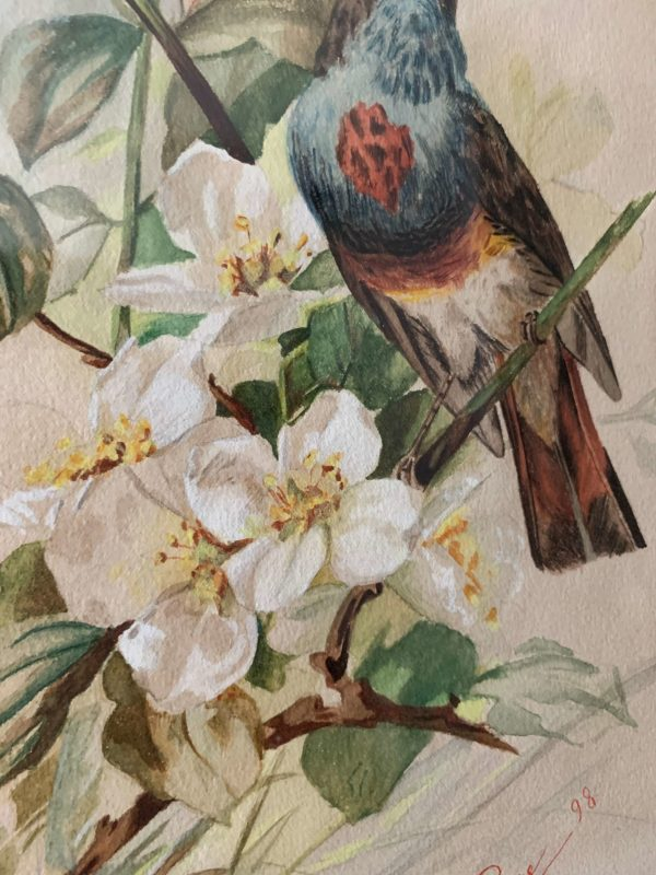 ancienne aquarelle fin xixeme oiseaux peinture claire