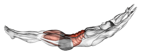 Muscles Used in the Hollow Hold
