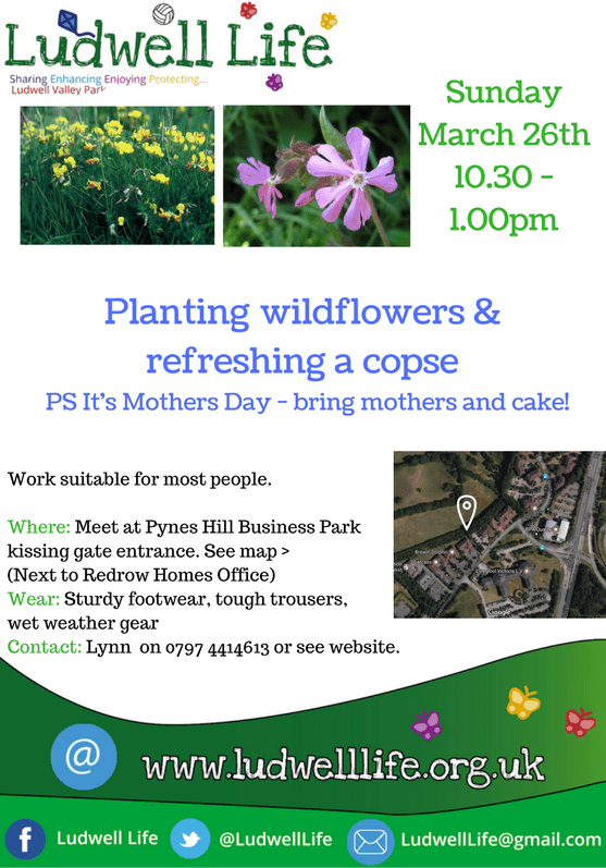 poster with details of Mother's day event
