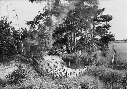 Marine Force Recon Combat Nam