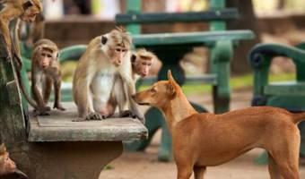 MONKEY KINGDOM – Happy Earth Day & New Clips Available!! #MonkeyKingdom