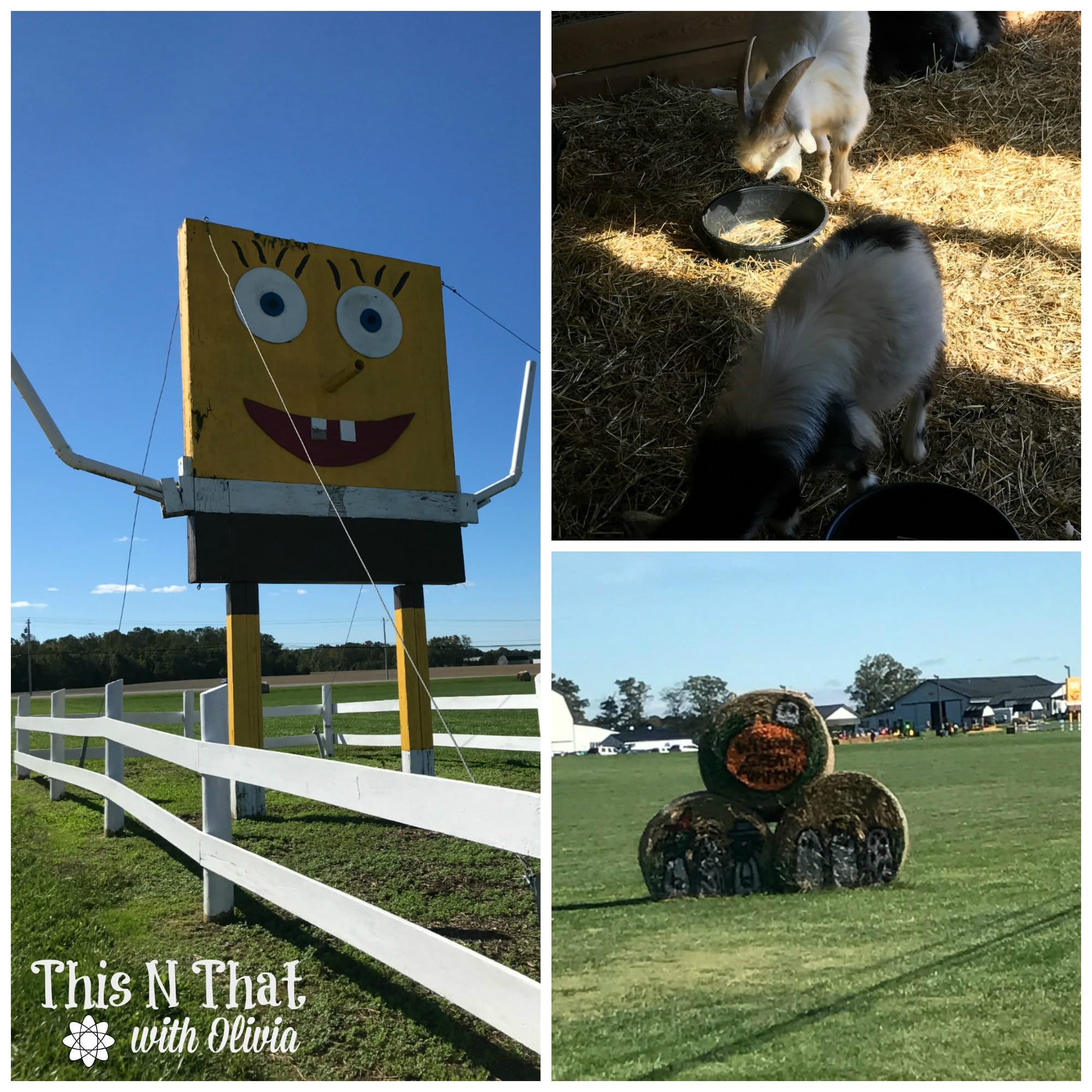 Corn Maze Family Fun Day at Bowles Farm! #PeanutsBrandAmbassador