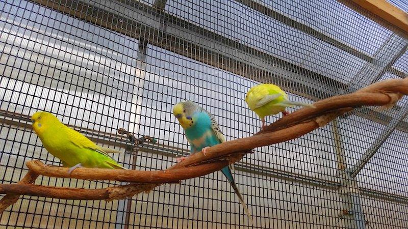 Birds Down Under Roger Williams Park Zoo