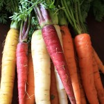 raw carrots2