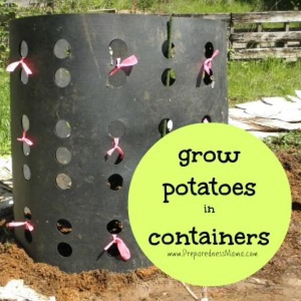 15 DIY Innovative Ways To Grow Your Own Food