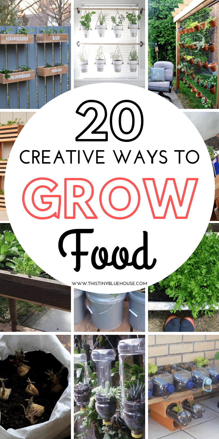 are you looking for creative ways to start growing your own food this summer but don't have access to a garden? Here are 20 easy DIY ways to start growing food without a dedicated garden space. #growyourownfood #growyourownfoodindoors #growyourownfoodbackyards #creativewaystogrowfood #howtogrowyourownfood #growyourownfoodapartment #growyourownfoodidy #growyourownfoodathome #growyourownfoodnogarden