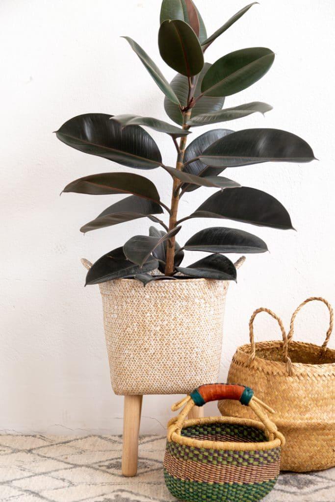 diy basket plant stand idea