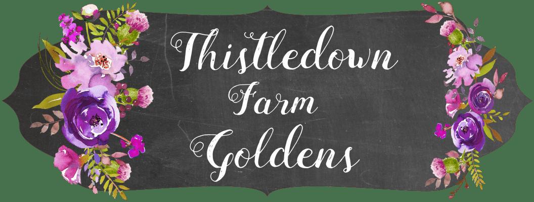 Thistledown Farm Goldens