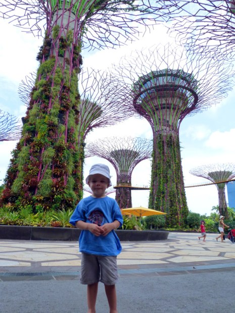 Great big plants. From the Wood's trip to Singapore in 2014