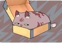 cat beaviour