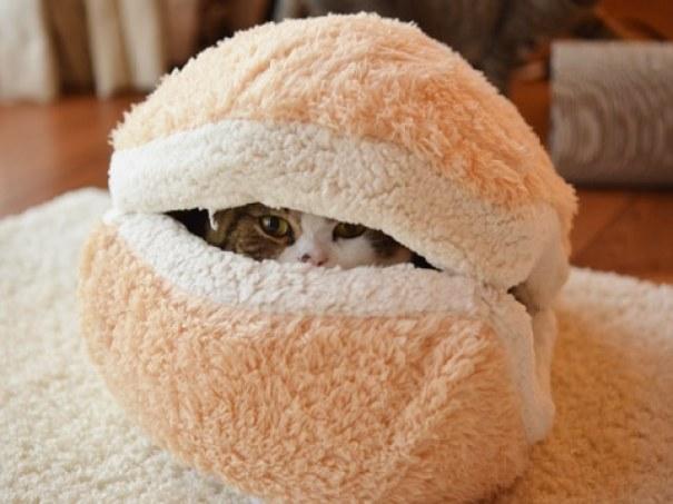 cat-burger-bed-maru-5