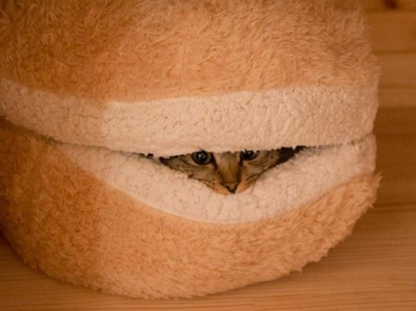 cat-burger-bed-maru-7