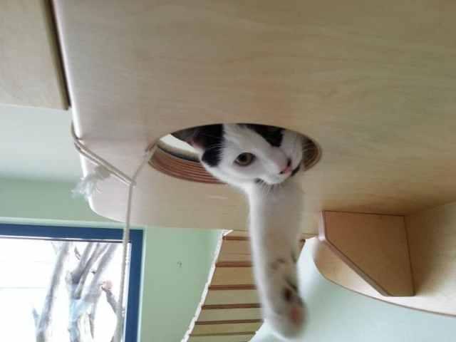 overhead-cat-playground-room-goldtatze-12