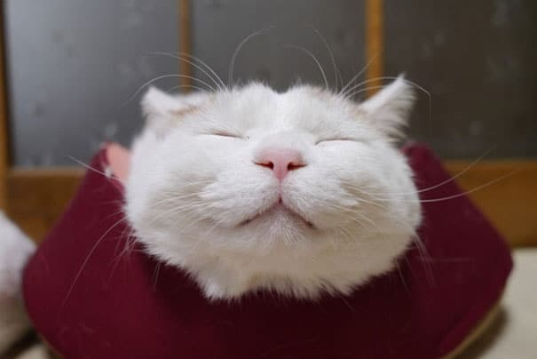 shironeko-happy-cat-3