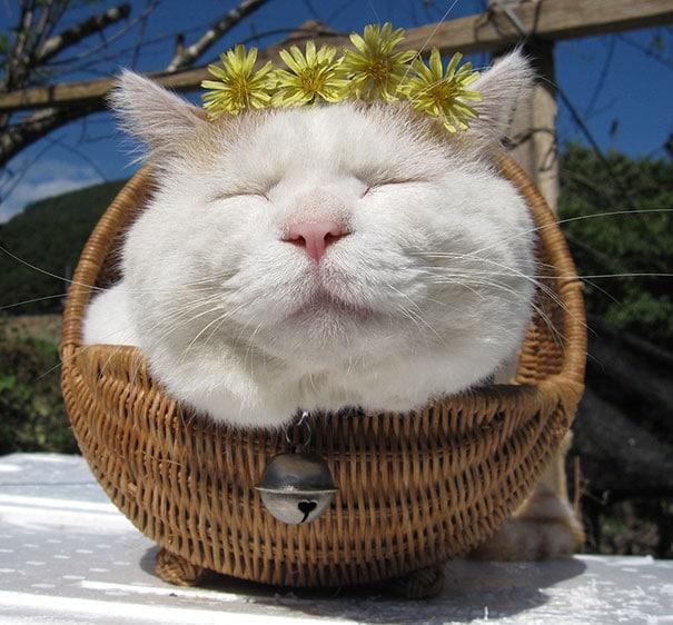 shironeko-happy-cat-63