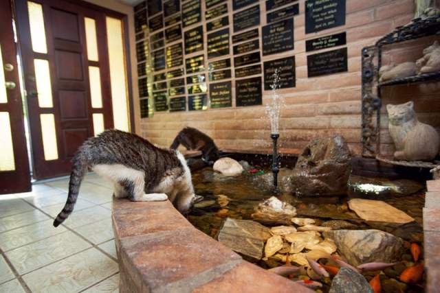 largest-cat-sanctuary-shelter-lynea-lattanzio-11