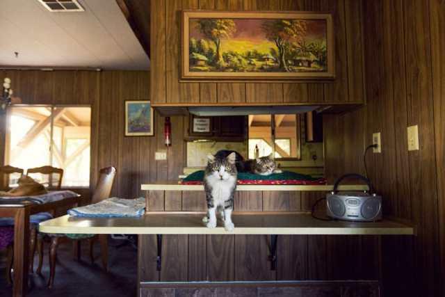 largest-cat-sanctuary-shelter-lynea-lattanzio-9