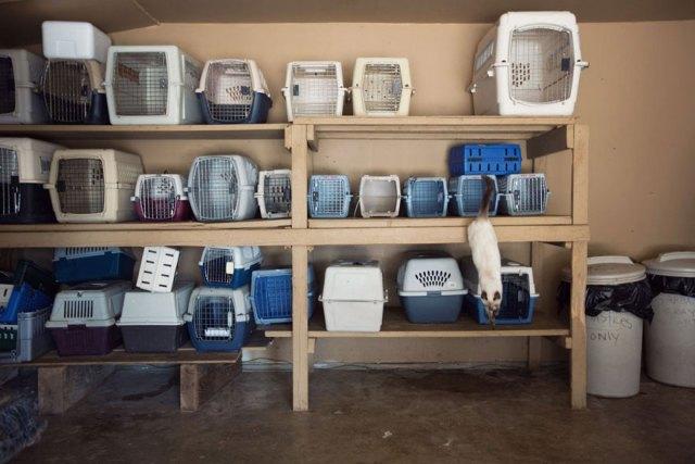 largest-cat-sanctuary-shelter-lynea-lattanzio-10