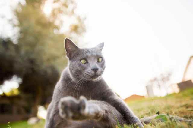 largest-cat-sanctuary-shelter-lynea-lattanzio-14