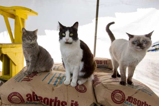 largest-cat-sanctuary-shelter-lynea-lattanzio-22