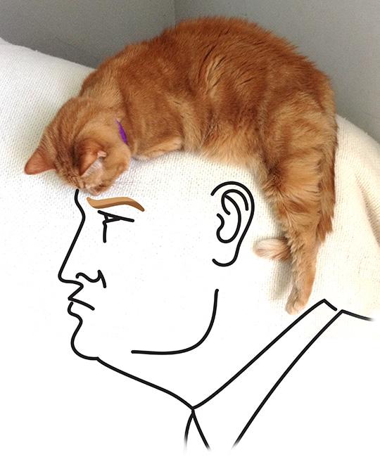 Trump.Chuck.Small