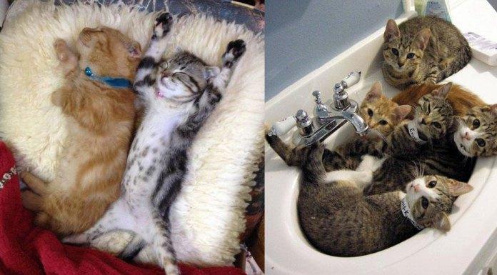 lazy-cats
