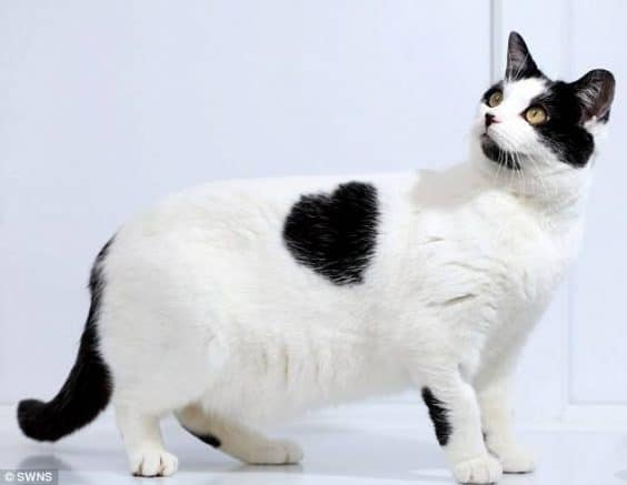35 Cats with totally cool markings